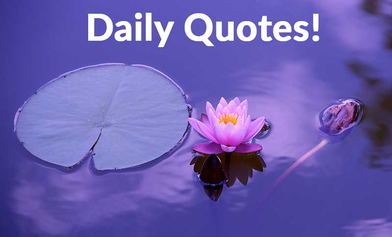 Daily Quotes !